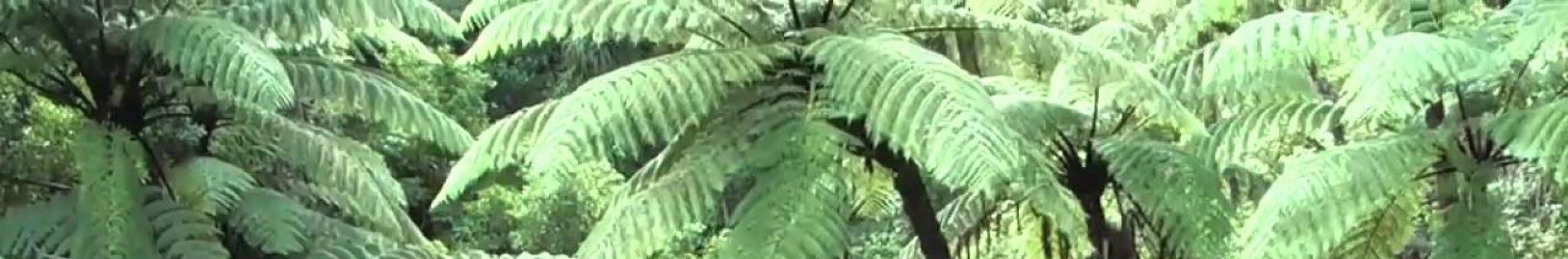 cropped-ferns.jpg
