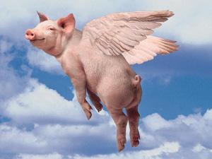 pigswings