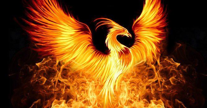 The AAAmazing Phoenix