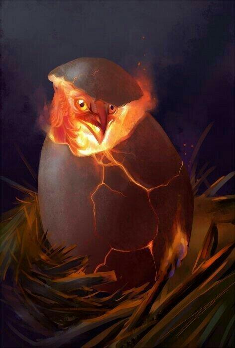 PhoenixBorn