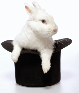 Rabbit playing with a magicians hat