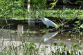 Partake: An Egret on a Summer Day